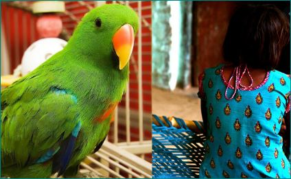 Pakistani Couple Beat 8 Year Old Help to Death she set their parrots free