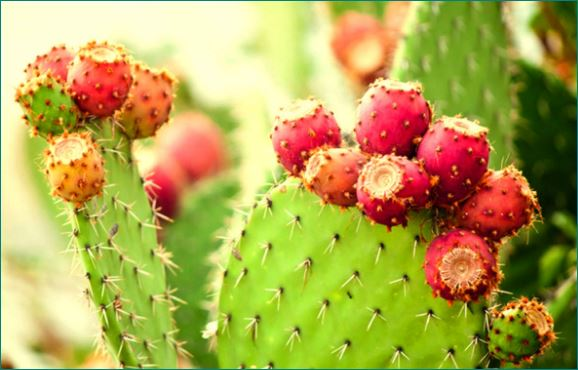 know about Mexico green gold