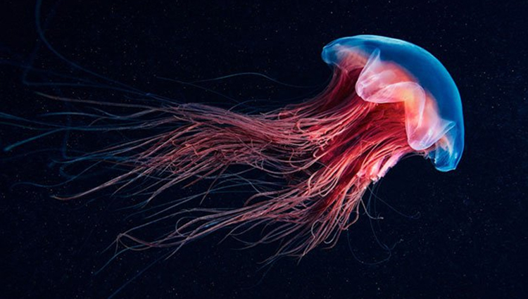 Breathtaking Undersea Photos by Alexander Semenov
