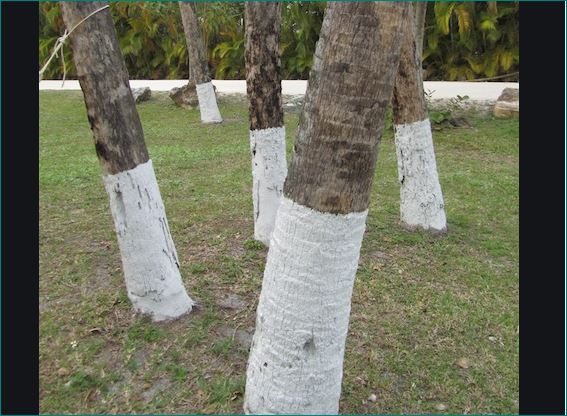 This is why white and red stripes are painted on trees