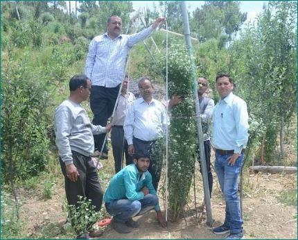 Uttarakhand Farmer Tallest Corriander Plant Guinness Book of World Records
