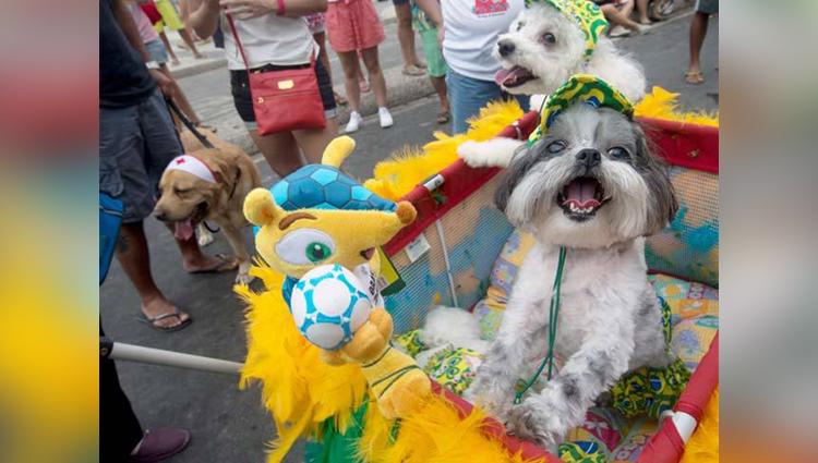 dog carnival in rio de janeiro