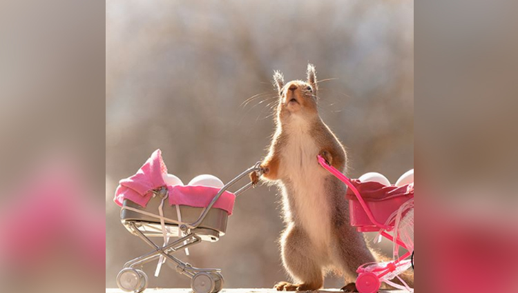 photographer Geert Weggen dedicates his ife to capturing squirrels