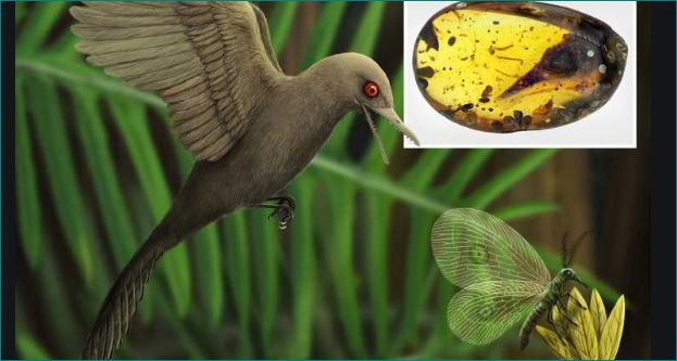 World smallest bird dinosaur found in 99 million year old northern Myanmar.