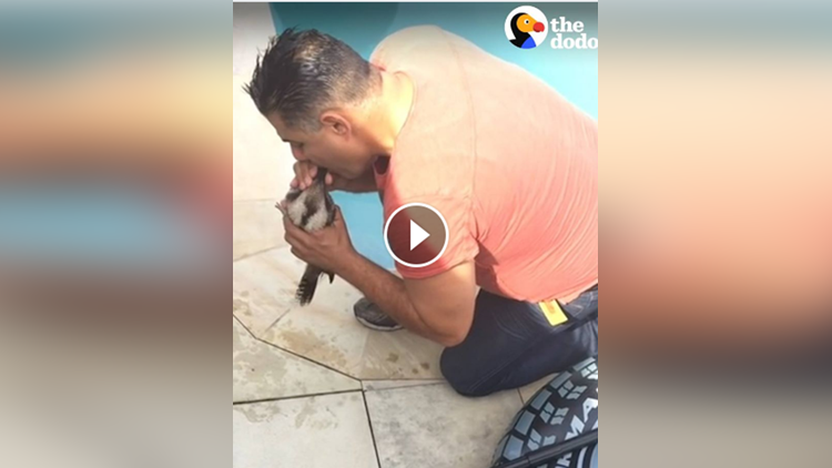 bird Who Was Drowning In Pool Gets