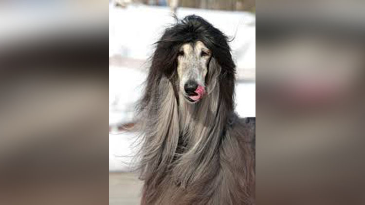 Animals Are Giving Tough Fights To Girls With Their Beautiful And Long Hair