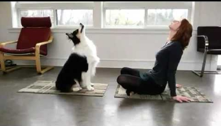 dog the yoga teacher