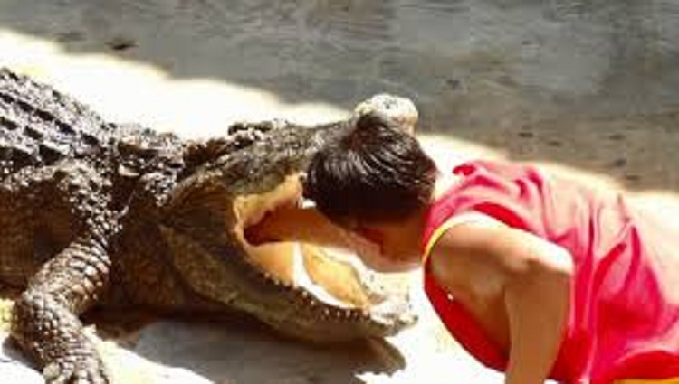 person put his head in the mouth of the crocodile