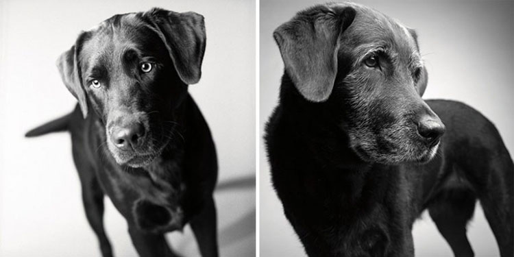 How Dogs Get Older A Deeply Touching And Fascinating Photo Series