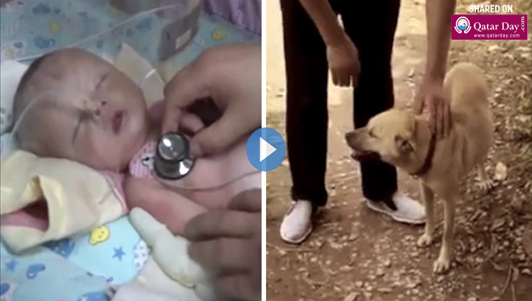 dog saved newborn baby that had been buried alive in wasteland
