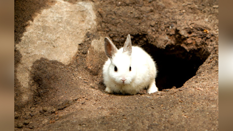 hidden secret in rabbits hole
