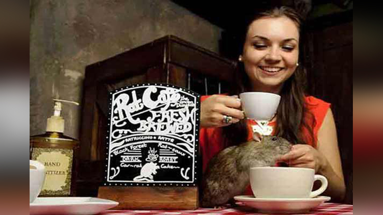 rat cafe in america