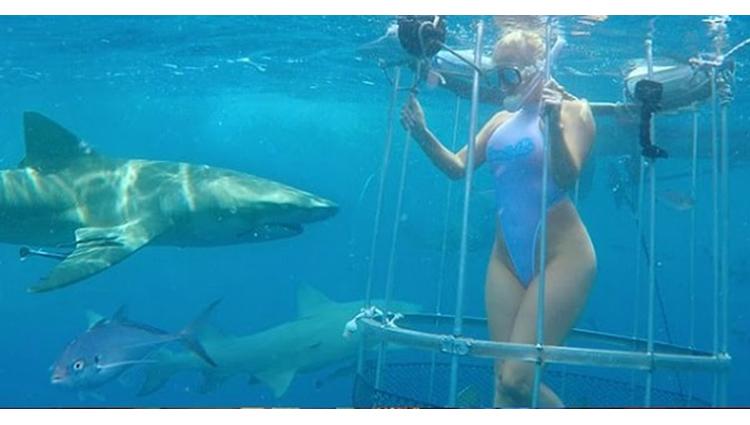 Shark Attack Cam Girl Bitten off Florida Coast