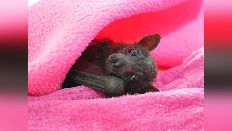 Treatment bats in the hospital