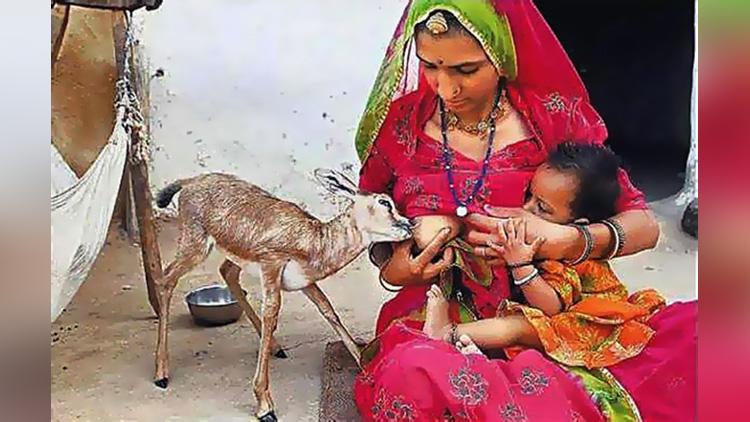 women feed deer child by breast milk