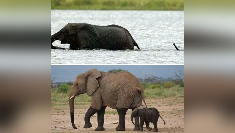 Baby Elephants pictures That Will Instantly Make You Smile