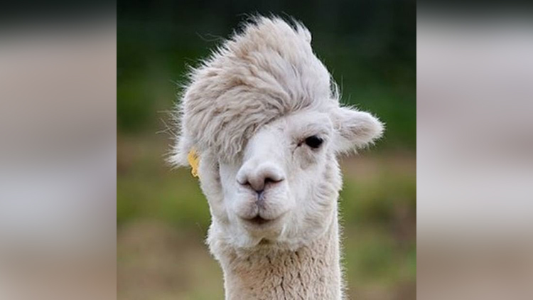funny and funky hairstyles of animals