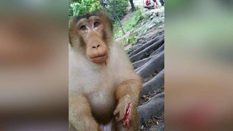 some people has injured animals