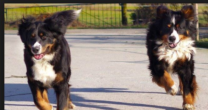 Man detained in China for giving dogs illegal names