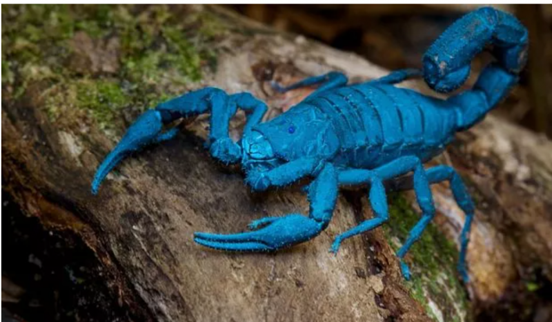 world most poisonous scorpion its poison is sold at 75 crores per liter