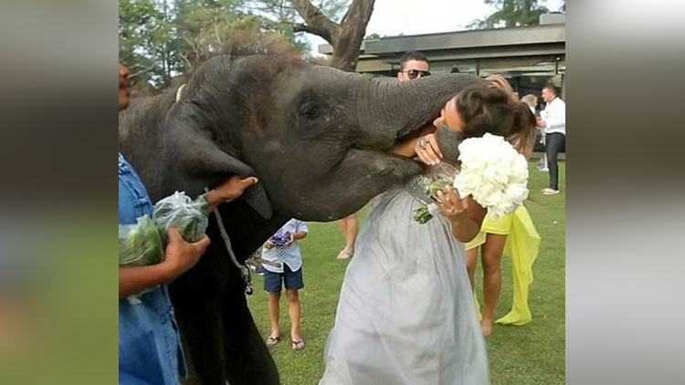 Shocking And Weird Wedding pictures