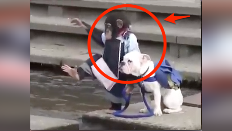 viral a video of chimpanzee and dog friendship