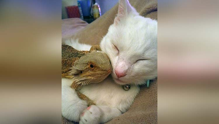 unbelievable unlikely animal friendships will make you miss your friend