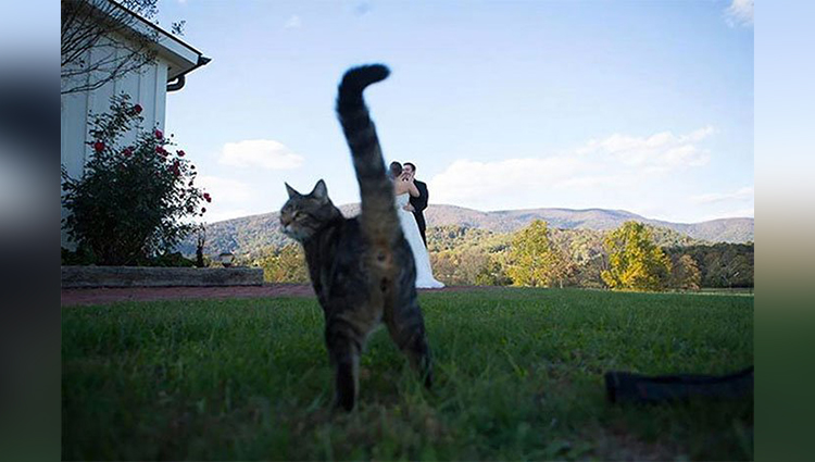 The Funniest Wedding Photobombs