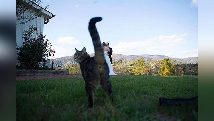 The Funniest Wedding Photobombs