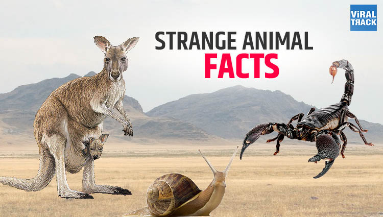 Amazing Facts You Did not Know About Animals