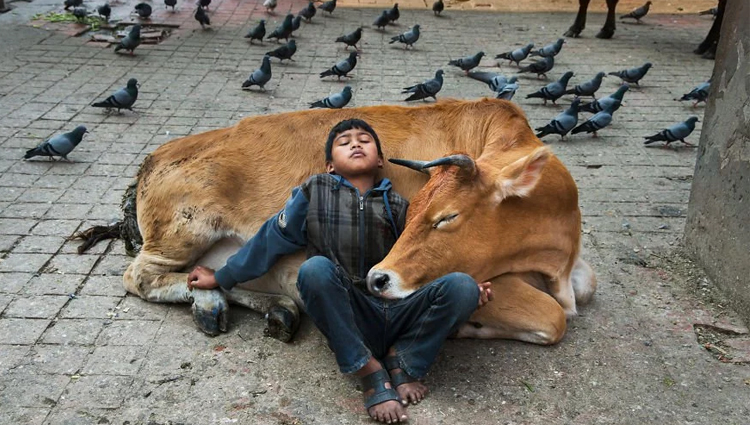 Photographs That Explore The Relationship Between animals and humans