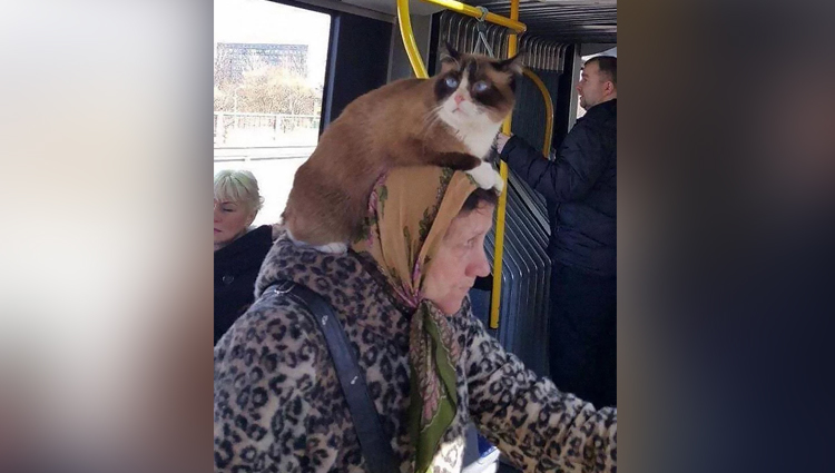 Funny Crazy and WTF Photos Of Public Transport