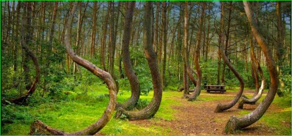Hoia Baciu Transylvania Haunted Forest