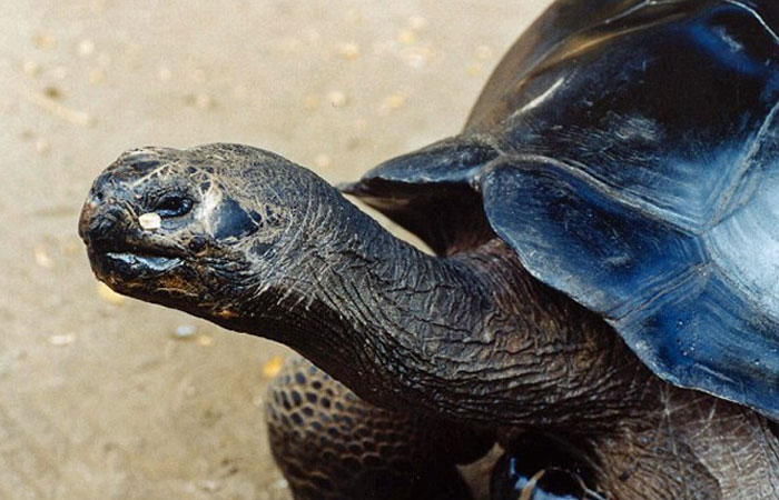 Enraged, the private parts of a person bitten by turtle