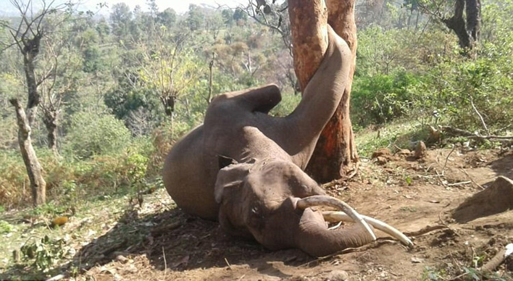 tragic end for elephant