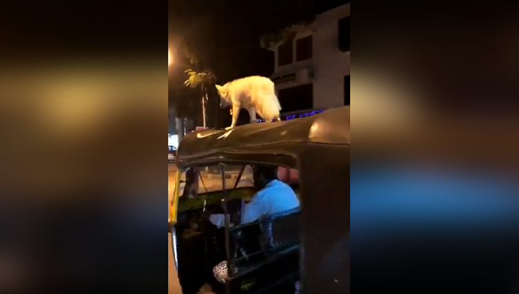 You will be surprised to see this Dog Sultan stunts