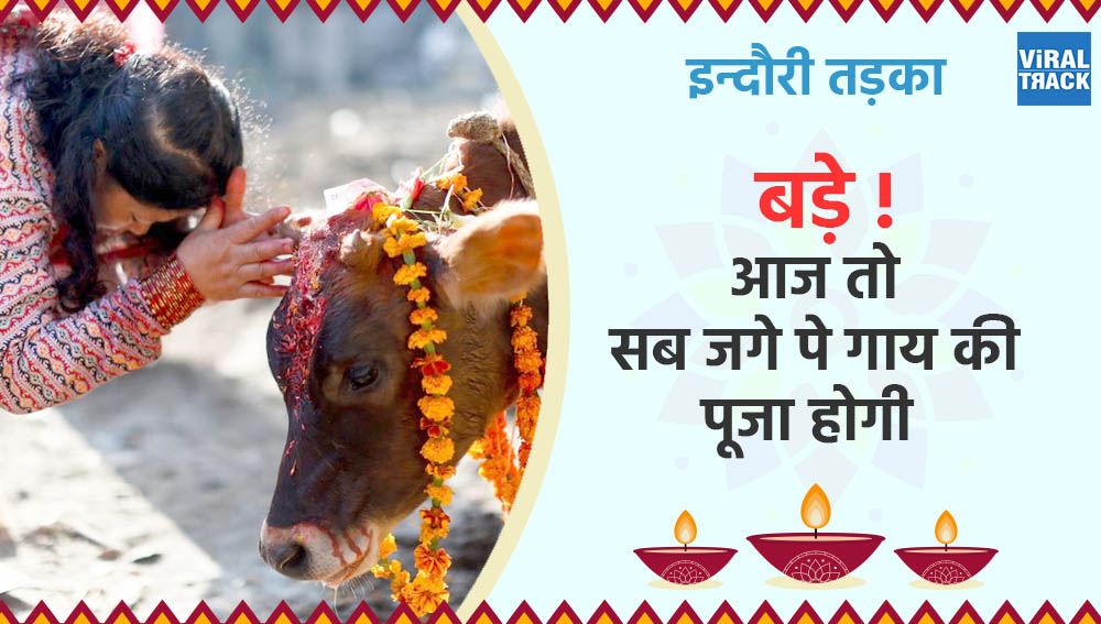 indori tadka : bde aaj to sab jage pe gaay ki pooja hogi