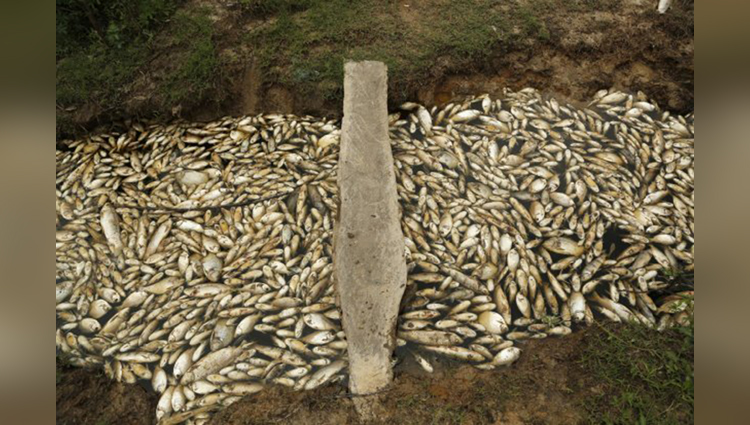 Tragic pictures show thousands of dead fish floating down a river