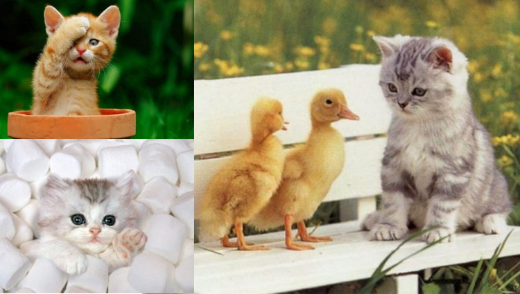 TOP 30 Cute Cats and Cute Kittens