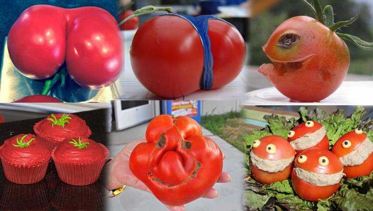 Funny Tomato photos