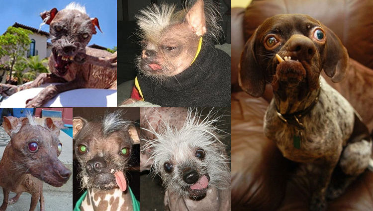 most ugliest and crazy dogs photos