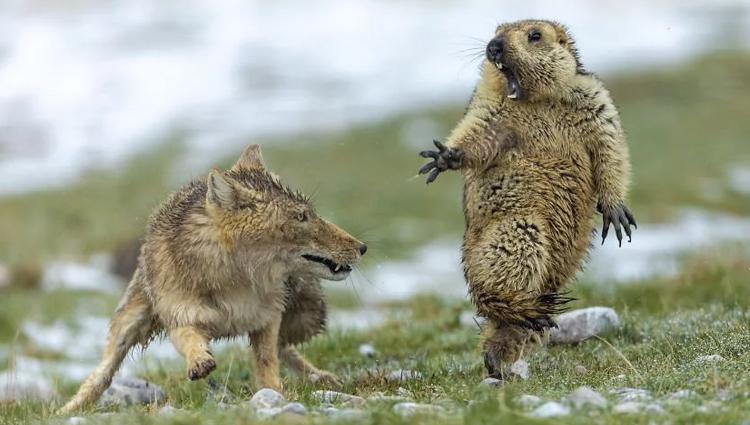 The Best Wildlife Photos Of 2019