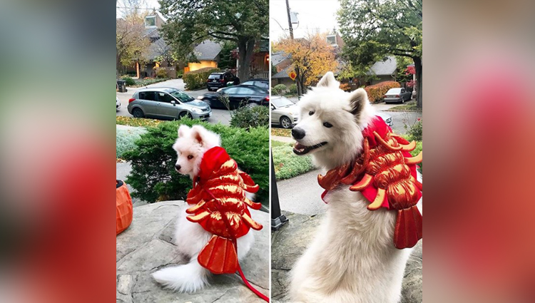 Adorable Pictures Of Dogs In Halloween Costumes