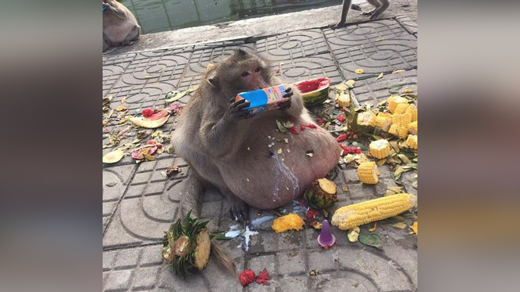 Monkey nicknamed uncle fatty gets sent to boot cam