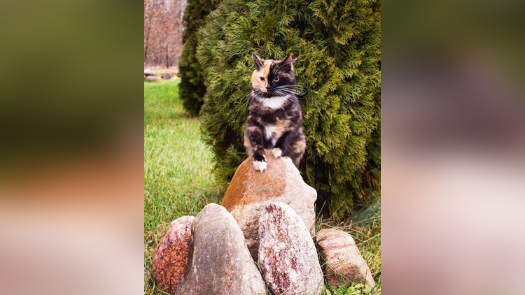 meet the charming two-faced cat taking point on the internet