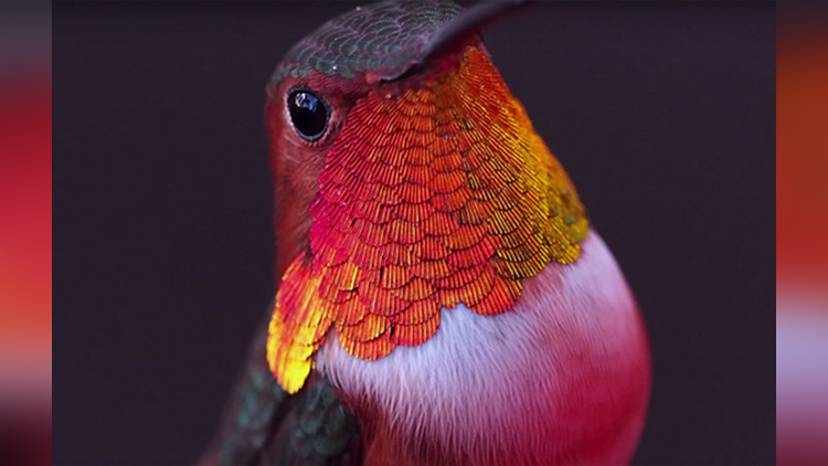 Girl Develops Bond With Over 200 Hummingbirds