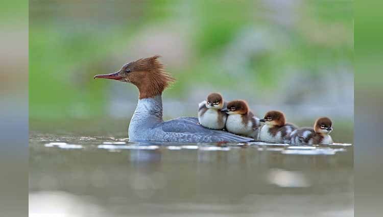 Bird Photographer of the Year 2017 photos viral on social sites
