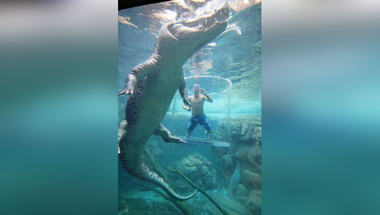 Tourists come face to face with massive 16ft long crocodiles in terrifying Australian cage diving attraction
