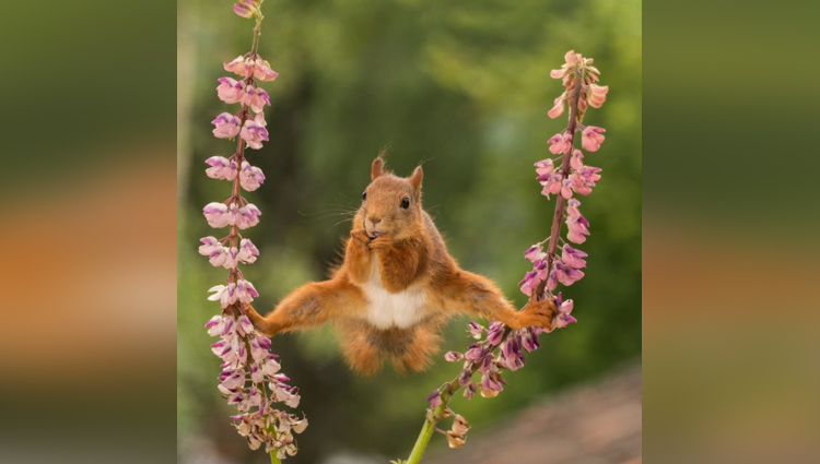 Wildlife amazing photos