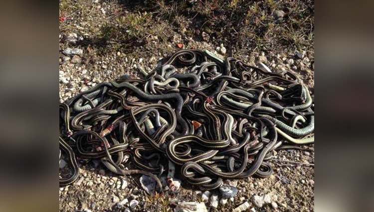 man flies germany to russia with 20 live snakes in hand bag